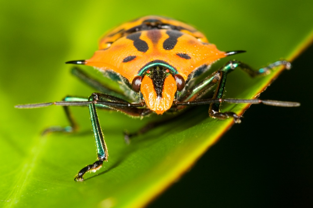 photoblog image Shield Bug is coming for you